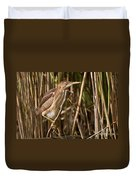Least Bittern Pictures 7 Duvet Cover