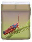 Leichhardts Grasshopper On Pityrodia Duvet Cover