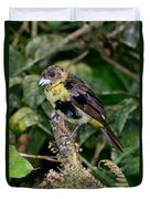 Lemon-rumped Tanager Molting Duvet Cover