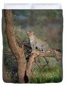 Leopard Panthera Pardus Sitting Duvet Cover