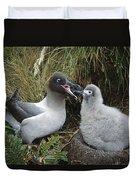 Light-mantled Albatross Feeding Chick Duvet Cover