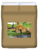 Lion In Repose Duvet Cover