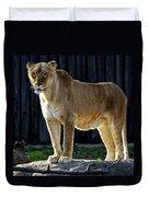 Lioness Duvet Cover by Frozen in Time Fine Art Photography