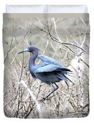 Little Blue In Rookery Louisiana Duvet Cover