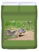 Little Marmots Duvet Cover