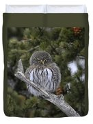 Little One - Northern Pygmy Owl Duvet Cover