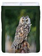 Long-eared Owl 4 Duvet Cover