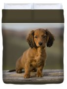 Long-haired Dachshund Puppy Duvet Cover