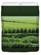 Louisiana Cane Field Duvet Cover