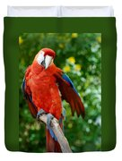 Macaws Of Color30 Duvet Cover