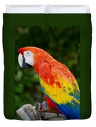 Macaws Of Color33 Duvet Cover