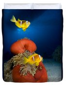 Magnificent Red Anemone With Anemone Fish Duvet Cover