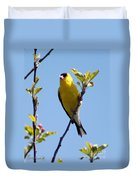 Male American Goldfinch Gathering Feathers For The Nest Duvet Cover