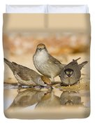 Male And Female Eurasian Blackcaps Duvet Cover