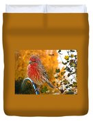 Male Finch In Autumn Leaves Duvet Cover