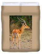 Male Impala With Horns Duvet Cover