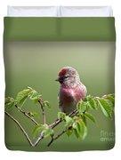 Male Lesser Redpoll  Carduelis Cabaret Duvet Cover