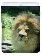 Male Lion Up Close Duvet Cover