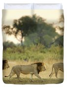 Male Lions At Dawn, Moremi Game Duvet Cover