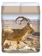 Male Nubian Ibex Capra Ibex Nubiana Duvet Cover