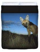 Maned Wolf Hunting At Dusk Brazil Duvet Cover