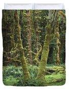 Maple Glade Quinault Rain Forest Duvet Cover