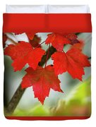 Maple Leaves Show Off Their Autumn Hues Duvet Cover