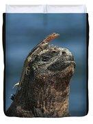 Marine Iguana And Lava Lizard Duvet Cover