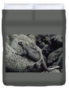 Marine Iguanas Galapagos Islands Duvet Cover