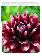 Maroon And White Dahlia Flower In The Garden Duvet Cover