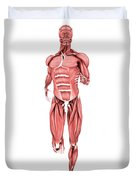 Medical Illustration Of Male Muscles Duvet Cover