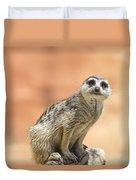 Meerkat Manor V3 Duvet Cover by Douglas Barnard