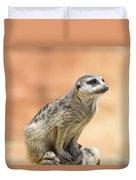 Meerkat Manor V4 Duvet Cover