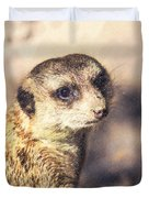 Meerkat Suricata Suricatta Duvet Cover