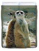 Meerkats Suricata Suricatta Duvet Cover