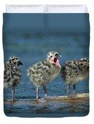 Mew Gull Three Chicks Duvet Cover by Tom Vezo