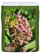 Milkweed Flowers In Bud Duvet Cover