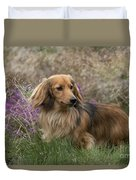 Miniature Long-haired Dachshund Duvet Cover