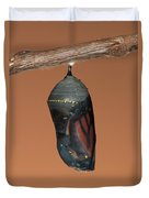 Monarch Butterfly Chrysalis II Duvet Cover