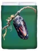 Monarch Butterfly Ready To Emerge Duvet Cover