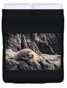 Montague Island Seal Duvet Cover