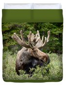 Moose Be Too Cool Duvet Cover