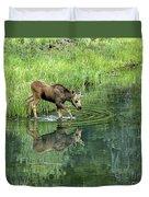 Moose Calf Testing The Water Duvet Cover
