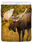Moose In Glacial Kettle Pond  Duvet Cover