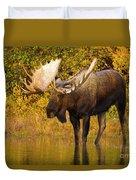 Moose In Glacial Kettle Pond  Duvet Cover