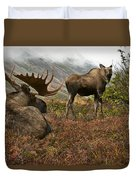 Moose Pair On Anchorage Hillside Duvet Cover