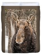 Moose Pictures 88 Duvet Cover