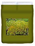 Moss And Fruiting Bodies - Green Lane Pa Duvet Cover