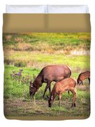 Mother Elk With Her Young Duvet Cover