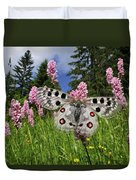 Mountain Apollo On Common Bistort Duvet Cover